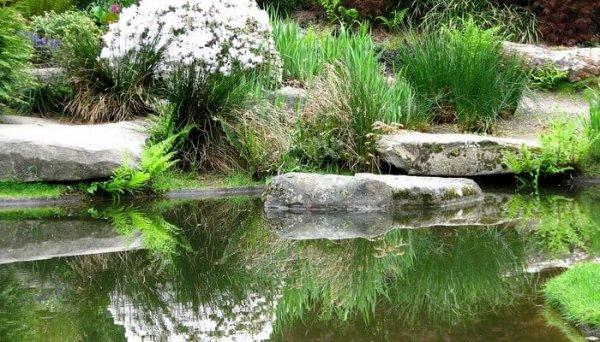 Фото 5 Строительство искусственных декоративных прудов и каналов 341614