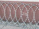 Фото  1 Плоска єгоза Козачка 450/3, плоская егоза Казачка. 2150406