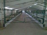 Фото 3 Будівництво корівників, свинарників, та реконструкція ферм 336117