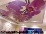 Фото 1 Натяжные потолки 330360