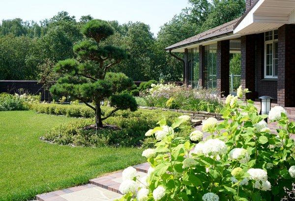 Фото 1 Ландшафтний дизайн 3D. Озеленення ділянки, саду. Автополив. Кривий Ріг 336618