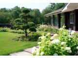 Фото 1 Озеленение участка, сада. Генеральный план, 3D визуализация, Автополив 336618