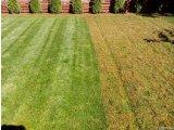 Фото 1 Аэрация Вычесывание газона Комплексный весенний уход! 342909