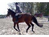 Фото  1 Решетка ТТЕ для конного манежа: грунт и покрытие для конного спорта (арены, водилки, левады) 2170414