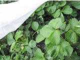 Фото 1 Белое агроволокно Greentex (-10t) 345370