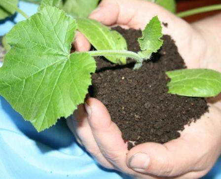 биогумус для улучшения почв