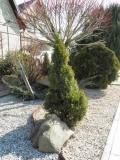 декоративный каминь, растения - полное составление проэкта Вашего участка, сада, огорода