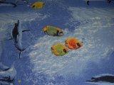 Фото  4 Детский ковролин Напол №5 4, 3 2228364