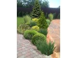 Фото 2 Ландшафтний дизайн 3D. Озеленення ділянки, саду. Автополив. Кривий Ріг 336618