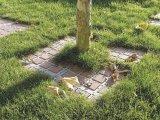 Фото  3 Георешетка ТТЕ: ландшафтный дизайн, озеленение 2023877