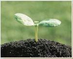 Грунт растительный Грунт незаменимый материал, используемый как для оздоровления почвы.