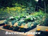 Фото 1 Высокие грядки - урожай в порядке! 326161