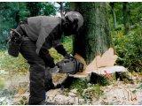 Фото 1 Валка, спил, деревьев. Продажа дров. Работы с зелеными насаждениями 340064