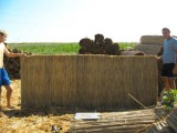 камышовые маты 1м*3м, 1.2м*3м,1.5м*3м, 1.7м*3м, 2м*3м, толщина 3-5см.