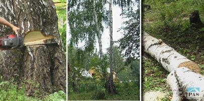 Корчевание, удаление пней. Вырубка деревьев на дачном участке, обрезка деревьев. Удаление дерева по частям.