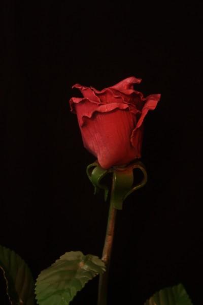 кованые розы на заказ в днепропетровске от производителя. Эксклюзивные кованые подарки