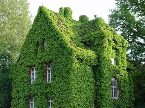 Кровельное и фасадное озеленение