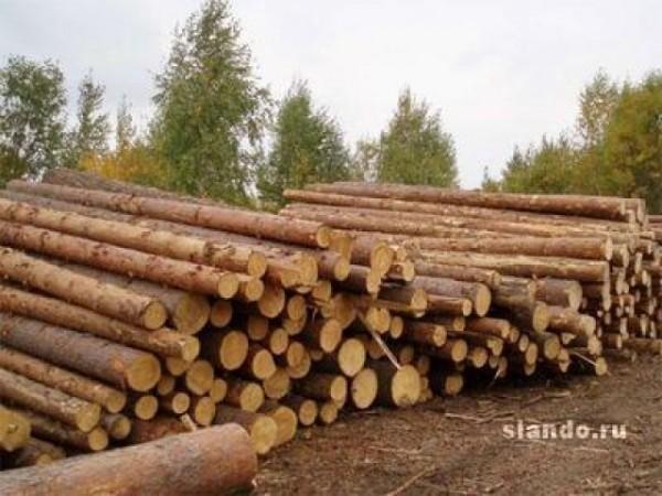 Лес кругляк сосна строительный с доставкой по Днепропетровской области Пиломатериалы по супер цене