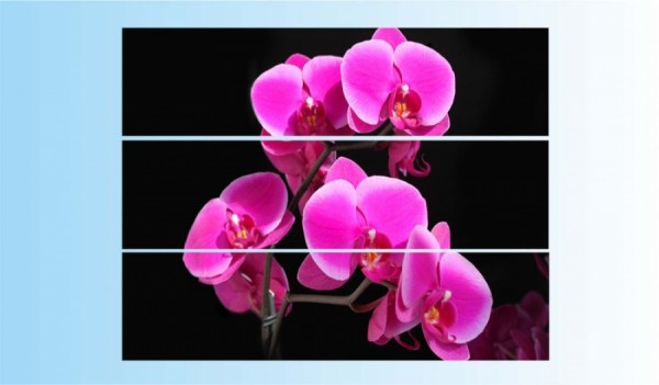 """Модульная картина """"Орхидеи на черном фоне"""" - 900,00"""