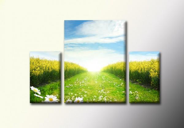 Модульная картина - Солнечная тропинка - 590,00 грн