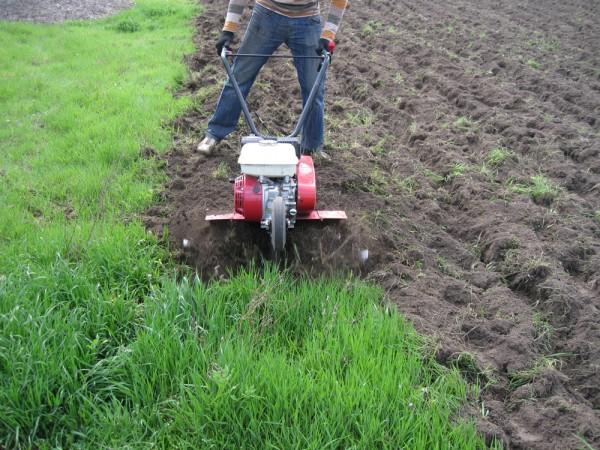 ОБРАБОТКА ЗЕМЛИ КУЛЬТИВАТОРОМ, ВСКАПЫВАНИЕ, ВЫРАВНИВАНИЕ ПОЧВЫ, УНИЧТОЖЕНИЕ СОРНЯКОВ. подготовка земли под посев травы.
