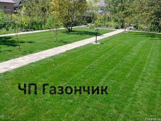 Фото 1 Озеленение Планировка Рулонный газон Укладка Борисполь район 342908