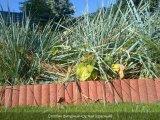Фото  4 Поребрик фигурный круглый (цветной на сером цементе) 4944807