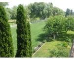Посадка деревьев и кустарников украинских и зарубежных производителей. гарантия и