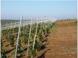 Проволока для виноградника 3 мм оцинкованная
