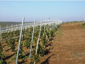 Проволока для виноградника