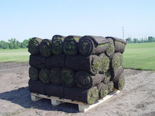 """Рулонные газоны. Партерный газон """"Super grass"""""""