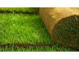 Фото 1 Рулонный и посевной газон 341337