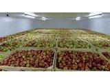 Зернохранилища, овощехранилища, фруктохранилища