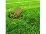 Посевной и рулонный газоны