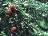 Фото 1 Сетка полимерная защита от птиц TENAX 345431