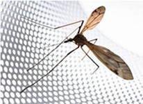 Фото  1 Москитные сетки от комаров в Борисполе и районе 1197346