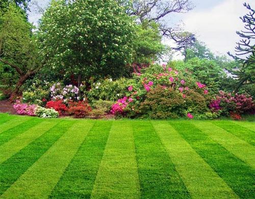 смеси семян газонных трав
