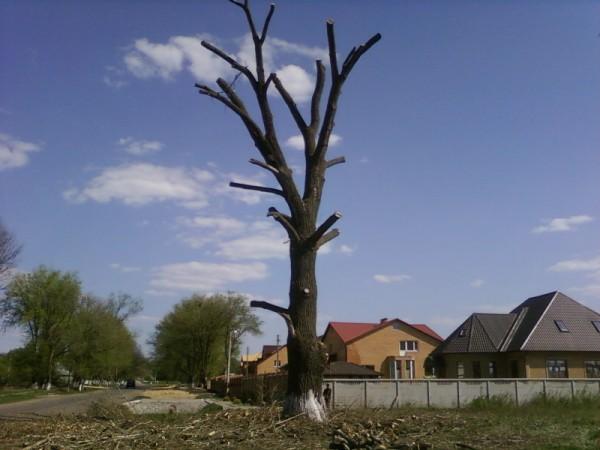 спил аварийных, мешающих деревьев