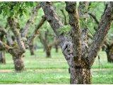 Фото  1 Спил деревьев садовых 1872815