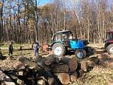 Спиливание деревьев и корчевание пней