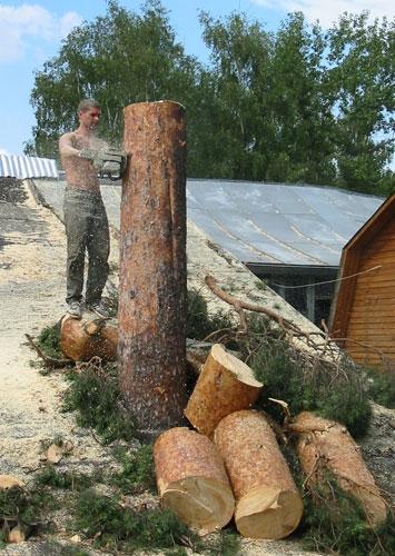 Спиливание деревьев, корчевание пней
