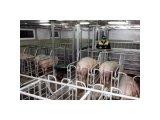 Фото  1 Строительство свинарников БМЗ по проекту 2151085