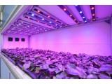 Светодиодная лампа для подсветки растений Plant Grow Lamp PAR38 с цоколем Е27