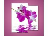 Цветы отражение в воде от 360,00