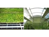 Термопленка KH 310 ( 305 ) Инфракрасное отопление домов, теплиц, ангаров. Подогрев грунта. Проращивание семян, рассады.