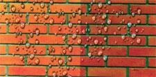 ТИПРОМ М - гидрофобизирующая жидкость для эффекта водонепроницаемости. Насыщенный цвет «мокрый кирпич».