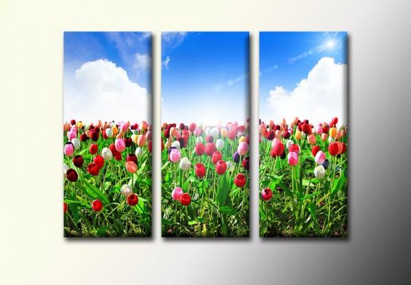 Тюльпаны 680,00 грн