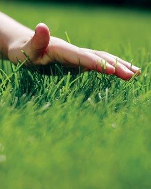 Устройство газона без учета материалов.