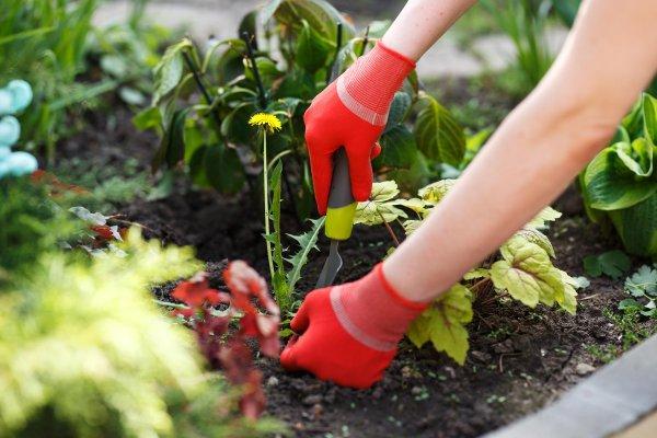 Фото 8 Услуги садовника. Комплексный уход за садом 342971