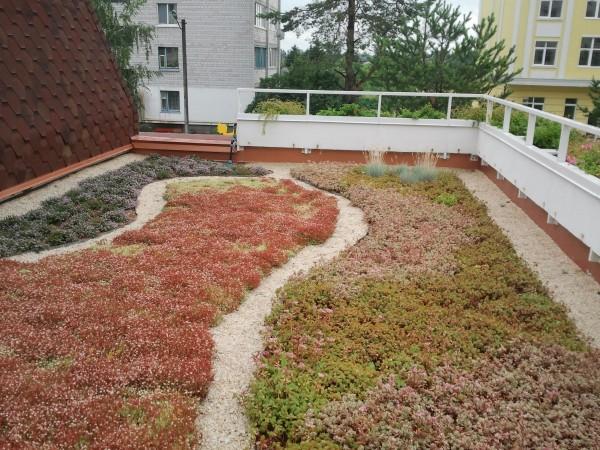 Зеленые крыши sadovi. com. ua